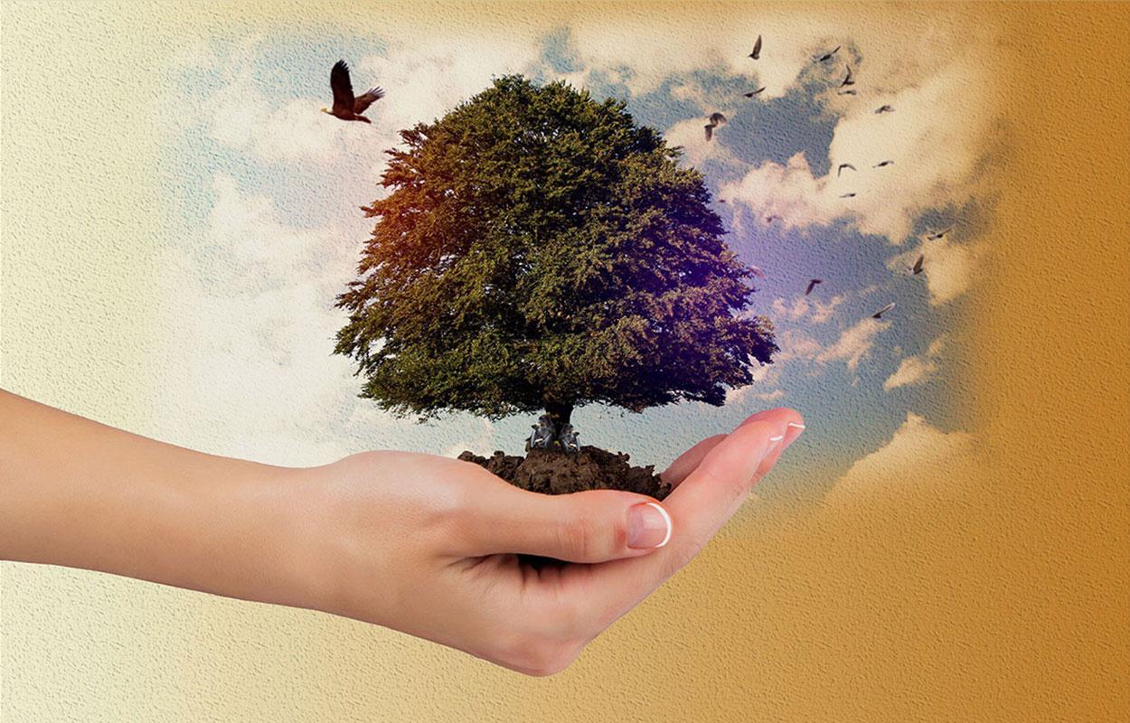 Manipuleret billede med hånd og træ